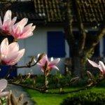 Es werde Licht: Frühlingskur für Balkon & Garten